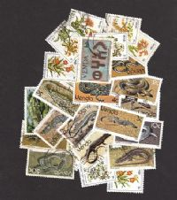 25 different Venda packet